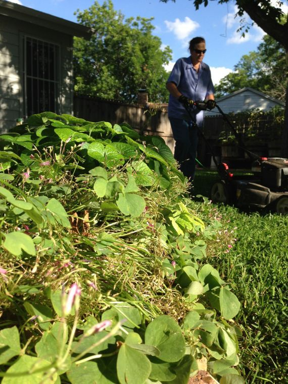 CW Lawn 3