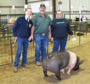 Grand champion hog