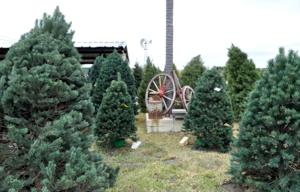 Christmas trees in Killeen