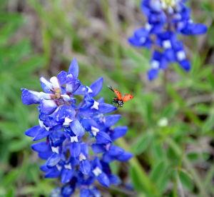 wildart lady bug