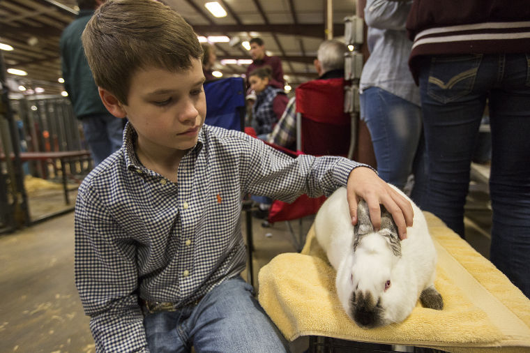 Confidence, care are keys  to winning big in rabbit shows