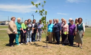 Garden Club members plant tree in memoriam