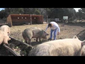 Net Zero Waste using Pig Farming