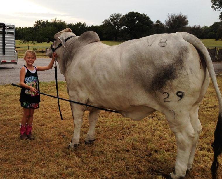 Heart of Texas livestock show