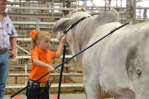 Heart of Texas livestock show
