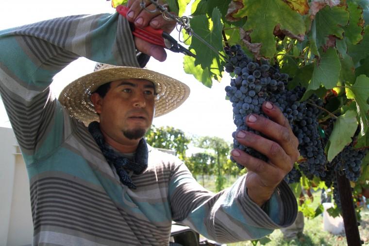 Vinyards at Florence-Inwood wineries 1.jpg