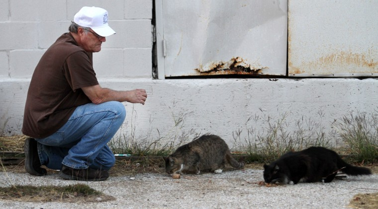 Feral Cats in Killeen