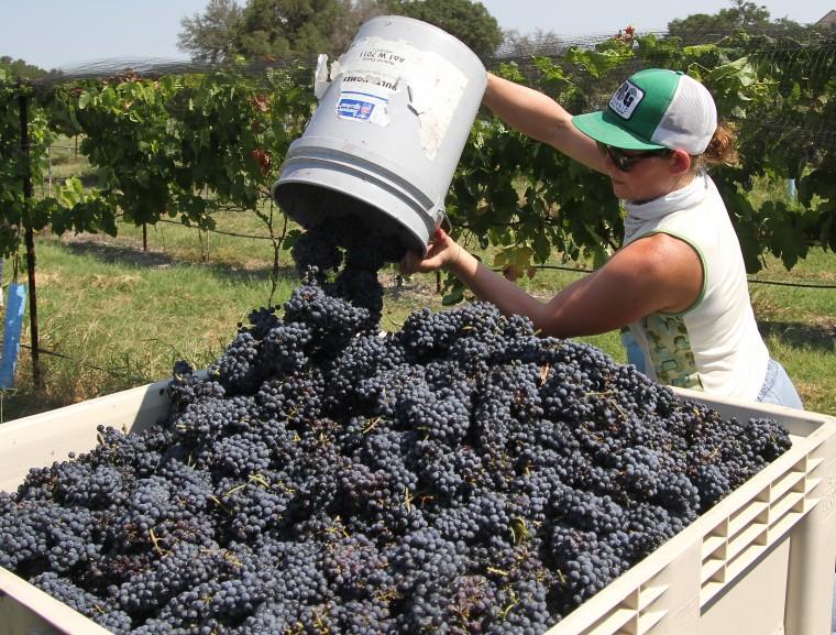 Vinyards at Florence-Inwood wineries 2.jpg