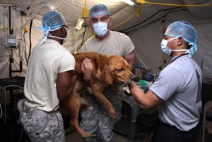 Soldier Animal Spaying.Photo Jaime Villanueva 0005.jpg