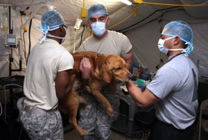 Soldier Animal Spaying.Photo Jaime Villanueva 0005.jpg