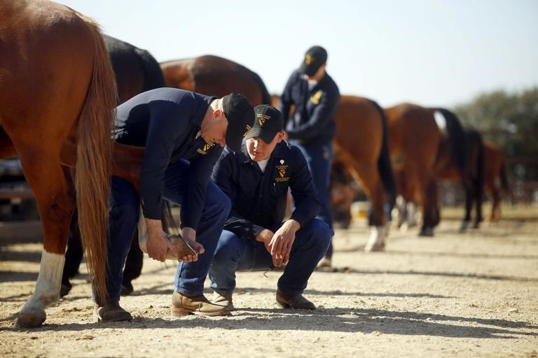 Horse detachment representing Greater Fort Hood Area during inaugural parade