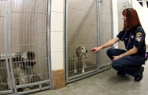 Animal Shelter Overpopulation