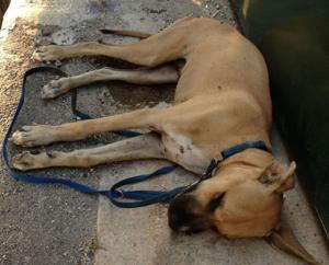 Dog found dead