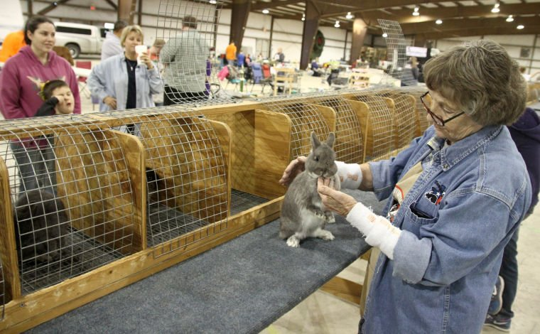 Mid-Tex RBA Rabbit Show