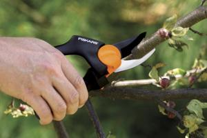 Winter is a good time to prune