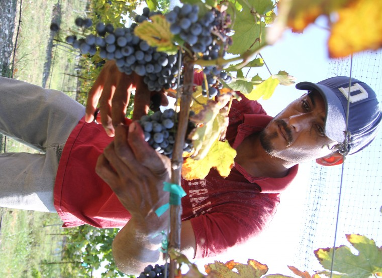 Vinyards at Florence-Inwood wineries 4.jpg