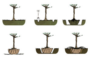 GARDENING: Six steps to successfully transplanting a tree. Top, left to right: 1) Measure the tree to get the rootball size and dig the new hole. 2) Dig a trench to give your self working space. 3) Taper the rootball inward and pile excavated soil on a tarp. Bottom, left to right: 4) Lift the rootball out and wrap and tie in burlap. 5) Make adjustments to new hole as necessary and drop the tree into it. 6) Peel back the burlap, cut the rope and fill in hole with excavated dirt. - Washington Post illustration by Susana Sanchez-Young