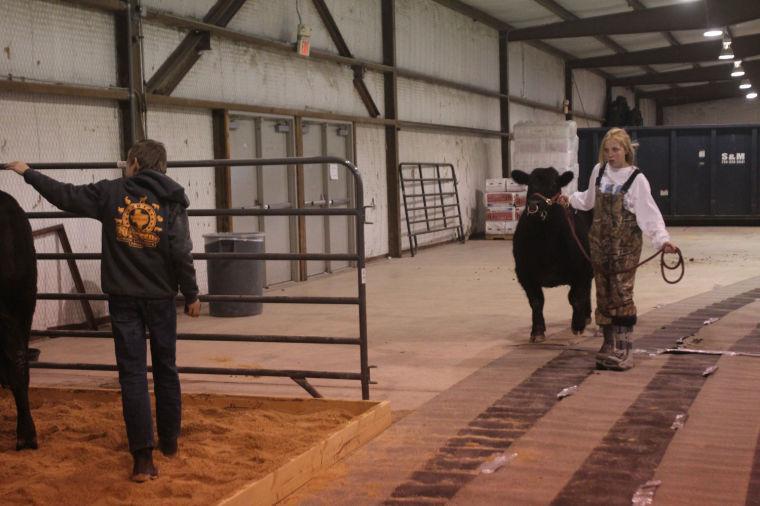LivestockShow6.jpg