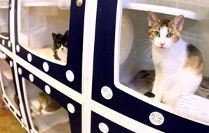 Animal Shelter Overpopulation