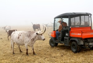 Retired couple raises longhorns