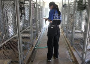 Banned Dogs at the Copperas Cove Animal Control