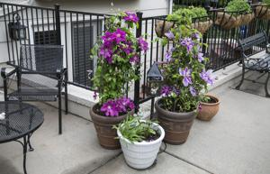 Tips for shifting the garden into containers