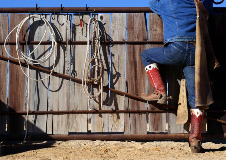 Cowboy's Life
