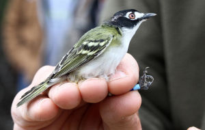 Endangered Birds on Fort Hood
