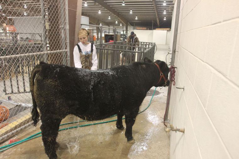 LivestockShow8.jpg