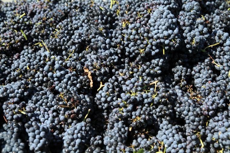 Vinyards at Florence-Inwood wineries 7.jpg