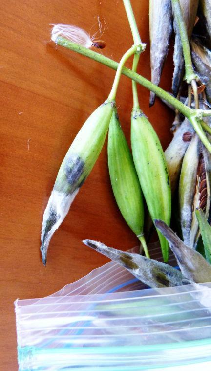 Storing seeds