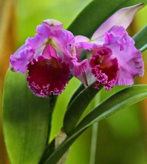 HOME-ENV-ORCHIDS