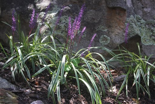 Gardening-Choosing Groundcovers