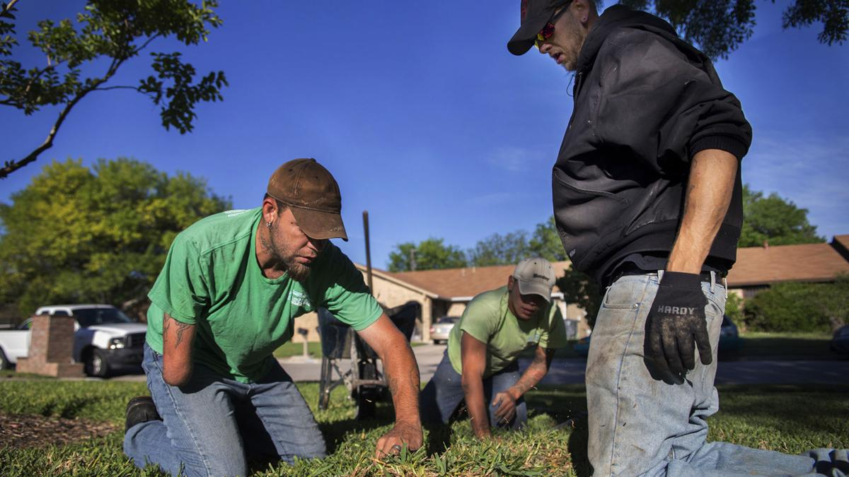 Copperas Cove native finds niche with landscaping company