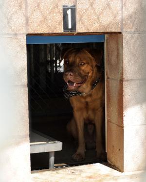 CC Animal Shelter