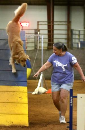 Bell County Kennel Club Agility Trials