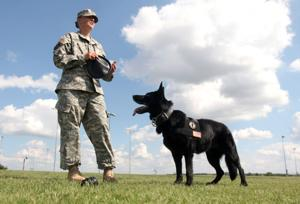 Retired Military Working Dog