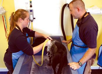 Self-service dog wash opens in Heights