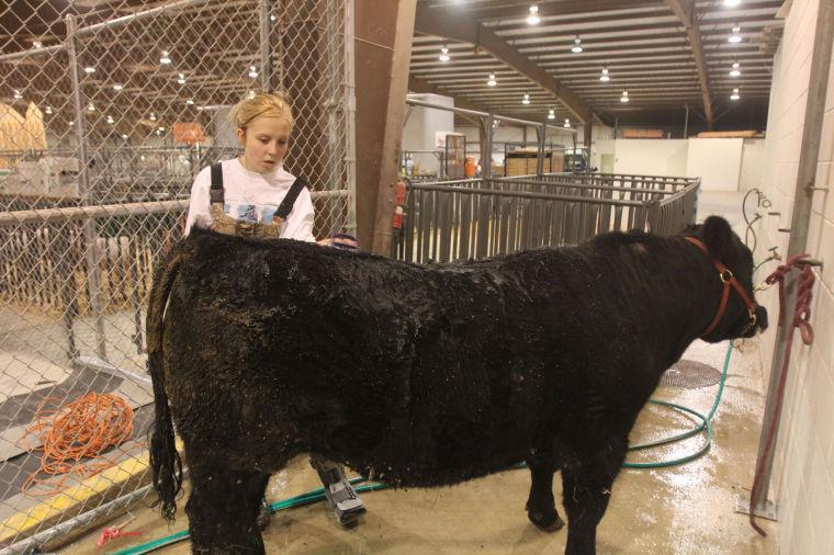 LivestockShow12.jpg