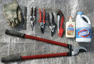 Finding the right tools for pruning