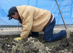 Wild Art Digging up Dirt