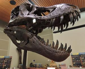 Dino George Traveling Exhibit open to the public