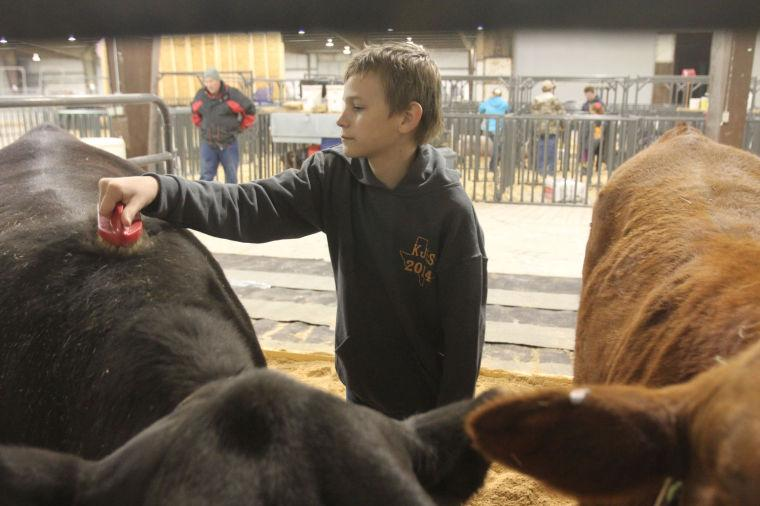 LivestockShow14.jpg