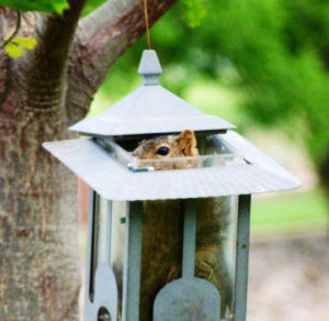 Avoid squirrely behavior with simple tricks