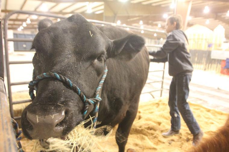 LivestockShow15.jpg