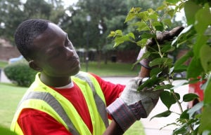 Landscaping Business: Travis Harns, with Central Texas Home and Lawn Transitions, trims branches in a yard Thursday morning on Bobcat Circle in Harker Heights. - Herald/MARIANNE LIJEWSKI