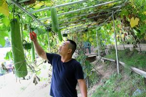 Giant luffa is this man's speciality