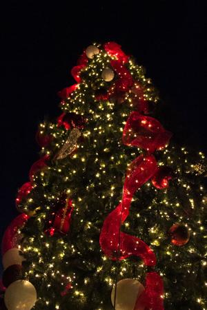 Harker Heights Christmas Tree Lighting