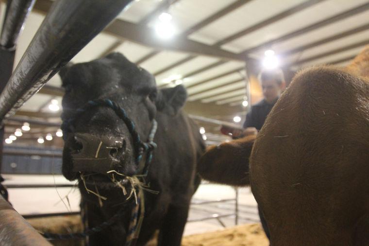 LivestockShow16.jpg