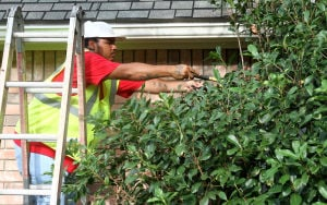 Landscaping Business: David Ramon, with Central Texas Home and Lawn Transitions, trims branches in a yard Thursday morning on Bobcat Circle in Harker Heights. - Herald/MARIANNE LIJEWSKI